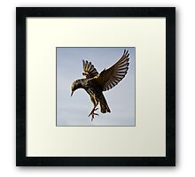 Starling Ballet Framed Print
