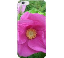 Wild Rose Glorious Pink Beauty iPhone Case/Skin