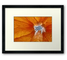 Grapefruit I Framed Print