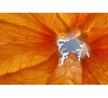 Grapefruit I Photographic Print