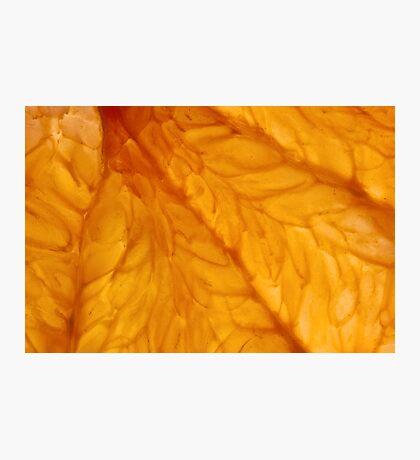 Grapefruit III Photographic Print