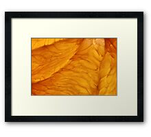 Grapefruit IV Framed Print