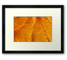 Grapefruit V Framed Print