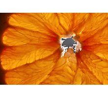 Grapefruit VI Photographic Print