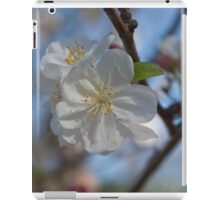 White CrabApple Blossoms iPad Case/Skin