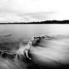 Flotsam by Tristan Rayner