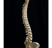 Human Spine by doorfrontphotos