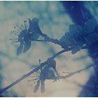 *winter*garden* by MelAncholyPhoto