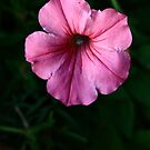 one in pink by Ghelly