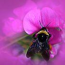 Bee Pink by CarolM