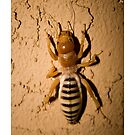 Ugly Bug by doorfrontphotos