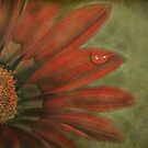 La Fleur by Susanne Correa