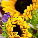 Sunflower by doorfrontphotos