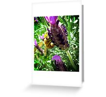 Lavender and the Bee Greeting Card