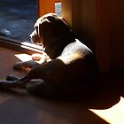 Fletcher Catching A Sun Beam by rharvey
