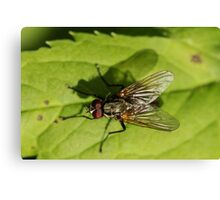 House Fly Canvas Print