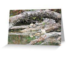 Sunbathing Reptiles Greeting Card