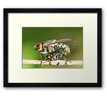 Flies Framed Print