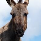 Alf the Donkey  by Jan  Postel