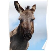 Alf the Donkey  Poster