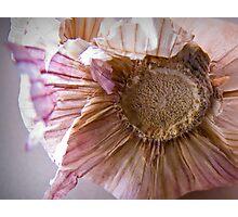 Garlic on my Kitchen bench Photographic Print