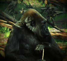 gorilla my dreams by Brock Hunter