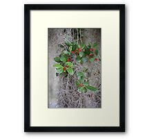 Ilex opaca - American Holly Framed Print