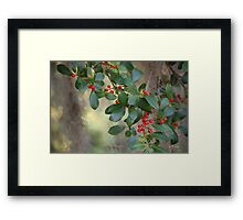 Ilex opaca - American Holly III Framed Print