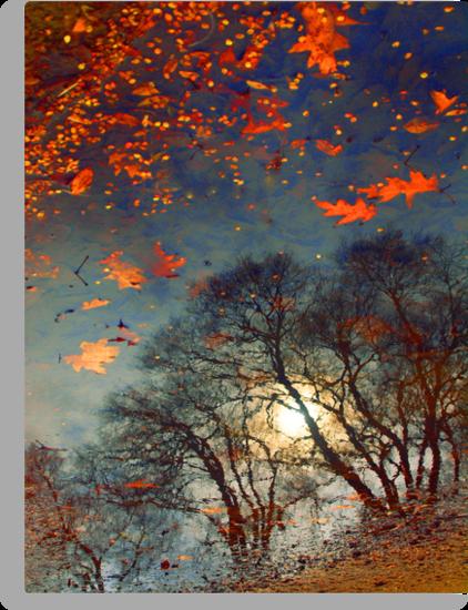 The Magic Puddle by Tara  Turner
