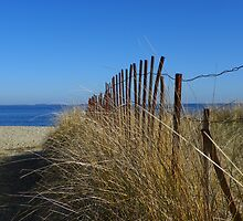 Fence and Dune Grass by MaryinMaine