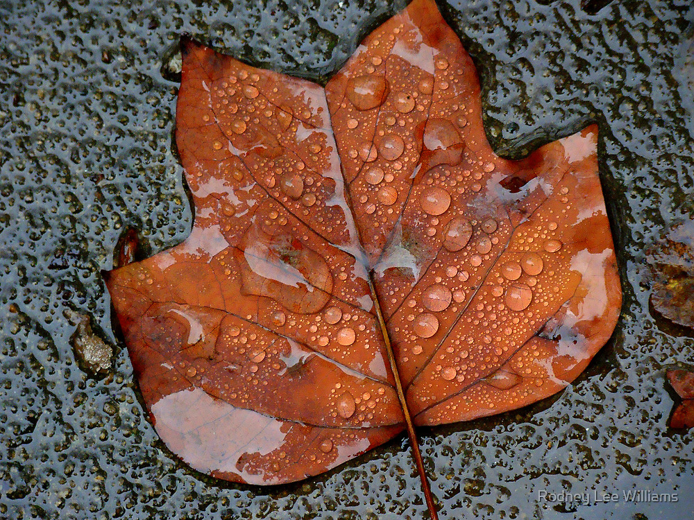 Autumn Moods 22 by Rodney Williams
