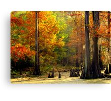In The Swamp, Cypress Trees Canvas Print