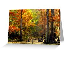 In The Swamp, Cypress Trees Greeting Card