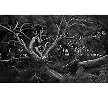 Dead Tree - Rottnest Island, Western Australia Photographic Print