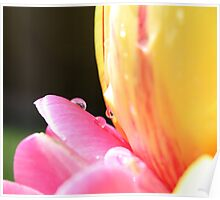 Spring Tulips (second piece to the set)  Poster