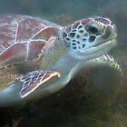 Prehistoric Face - Hawksbill Turtle by Bob Webb