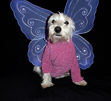Bella the beautiful butterfly by Pascal and Isabella Inard