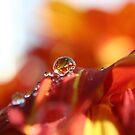 drop of Sunshine by SKNickel