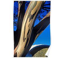 Snowgum bark detail, Falls Creek Victoria Poster