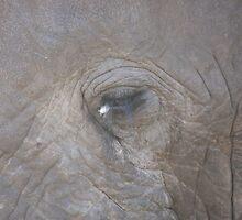 Elephant eye by Jo McGowan