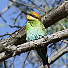 Bee_eater Up close by Rick Playle