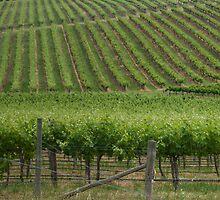 Vineyards 4 by Werner Padarin