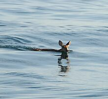 Deer in Lake Michigan by amyklein196203