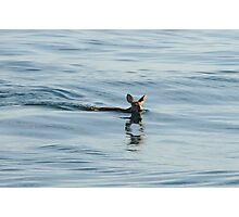 Deer in Lake Michigan Photographic Print