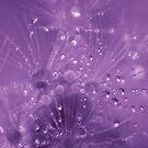 diamonds & pearls by Adriana Glackin