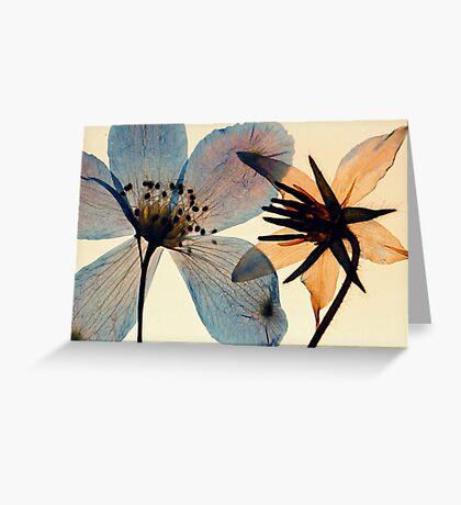 californian wildflower Greeting Card