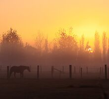 Golden horse by houenying