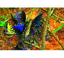 Butterfly luncheon Photographic Print