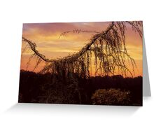 Weeping Evergreen Greeting Card