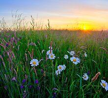 Meadow Sunrise by Doug Chinnery